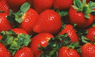 fraises-rouges---nutrition