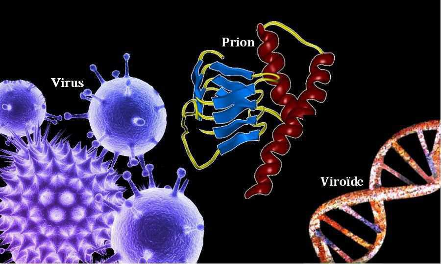 virus viroide prion