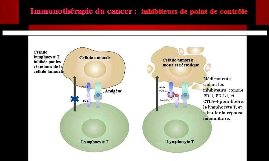 Checkpoint cancer